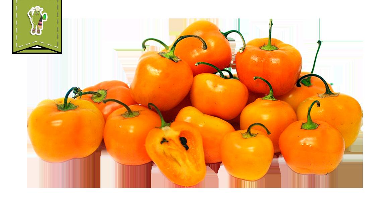 Manzano Chile Pepper - Frhomimex